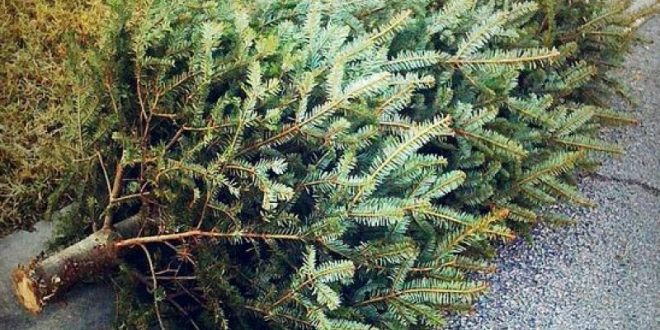 Image result for curbside tree pick up